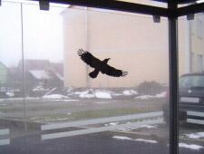Scheibendekor Wartehalle SD7 mit Raubvogelaufkleber